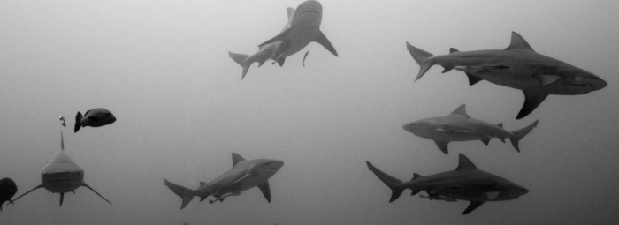 App Reviews: djay 2, Drive Assist, Ultimate Sharks