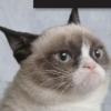 Metro Reviews: Grumpy Cat, Godus, Forrest Gump