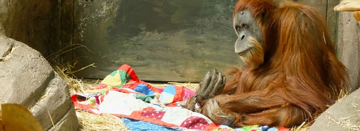 Quilting For Chimps, Multiplayer Cycling, And Making Stalker Apps Illegal