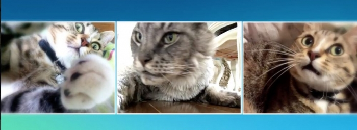 Cat Selfies Using Candid Catmera With Jen Mete