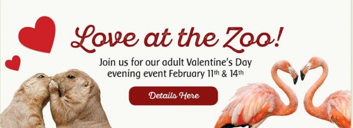 Love At Toronto Zoo With Dr. Gabriela Mastromonaco