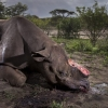 Rhino Poaching & Wildlife Photographer Of The Year With Mark Peck