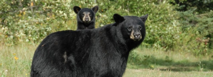 Ella Kitzul on Black Bear Rehabilitation