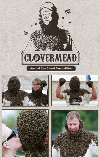 clovermeadbees