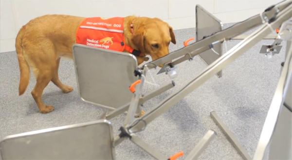 dogtech2